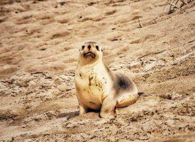 Kangaroo Island Tour Students Explore Australia 1