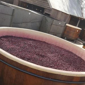 Students Explore Australia Wine Tour Barossa Valley (U) (50)-11